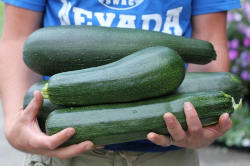 Zucchini Overload? Delicious Way To Use That Bumper Crop