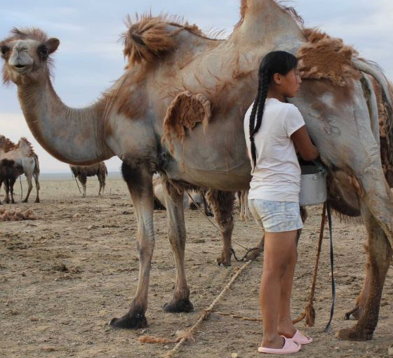 Can Camel Milk Help FPIES, Allergy, Autism, and More?
